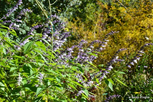 jardin octobre,chez Marylaur,Arnaud ,Ariane,la mer,sauges 181.JPG