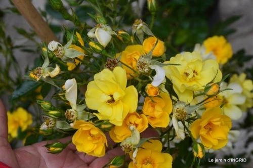 Colombier,Cadouin,jardin,roses,pluie 057.JPG