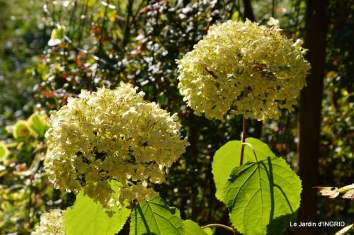 jardin ,chez Fabien,automne 001.JPG
