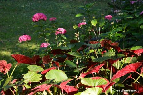 jardin juin,cabane,bouquet 067.JPG