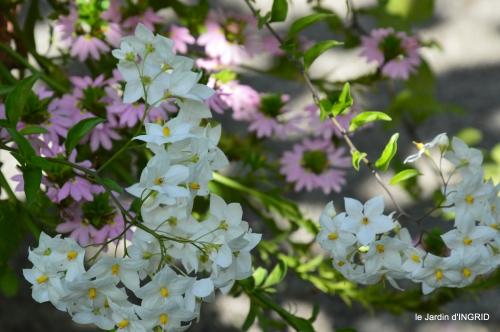 jardin,coeur des fleurs,potager, 155.jpg