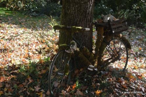 sauges,bouleau,coucher de soleil,érables,automne 011.JPG