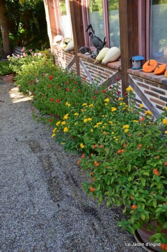 ménage automne,plectanthrus,feuillages 036.JPG