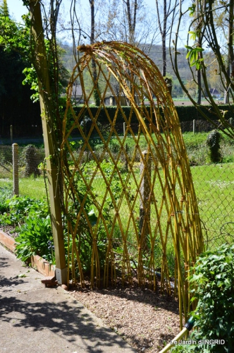 jardin avril,tulipes pivoine,iris d'eau,chenilles 018.JPG