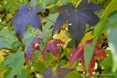sauges,plectanthrus,Romane,canal,manthe r.,automne 163.JPG