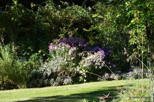 jardin,asters,fleurs blanches,chatte,rosiers roses 049.JPG