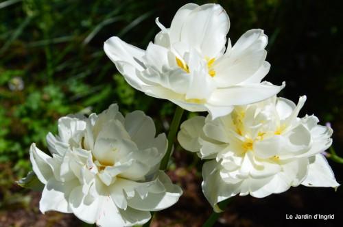 mésanges,escargots,ros. de banks,abeilles,Monpazier,Banes,Forêt 129.JPG