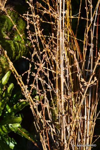 bureau,arbustes dorés 024.JPG