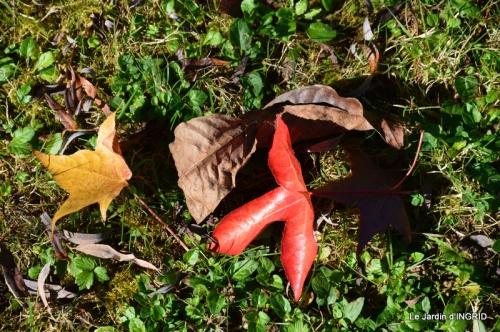 jardin ,Arya,noix 022.JPG