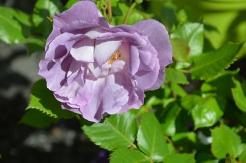 chateau  Banes,marché fleurs Lalinde 066.JPG