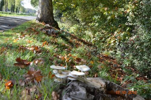 champignons,citrouilles,st Mayme de Péreyrol,fuschias,jardin aut 008.JPG