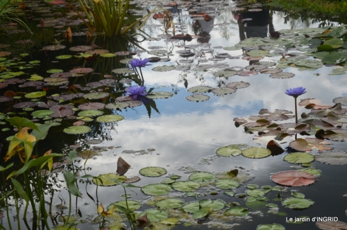 orage,puces,bouquet,Anniv.Ines,Brantome,Jardins d'eau 337.JPG