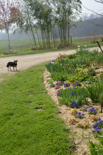 Beaumont,tulipes,primevères et autres,chez Bernadette 146.JPG