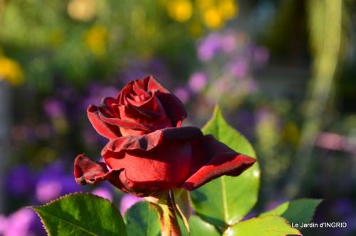 jardin Mme Perichou,grandes fleurs,bouquet,jardin 141.JPG