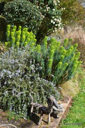 jonquilles,fête de l'arbre,jardinage,bouquet 091.JPG