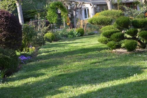 avant tonte,après,euphorbes,tulipes botaniques,autres 060.JPG