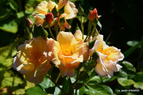 confiture,bouquet,petit jardin 013.JPG