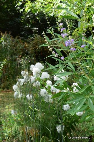 dahlias,jardin,puces st Avit Seigneur,Paniers Issigeac,Romane 283.JPG