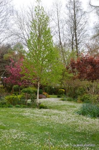 jardin confiné ,osier,magnolia jaune 067.JPG
