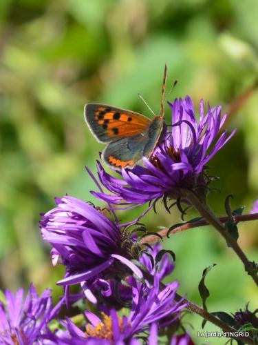 papillons,couleurs d'automne,Bernadette,pluie 013.JPG