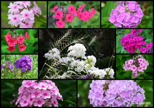 2017-06-27 velos,pluie,belles vivaces,taille rosiers2.JPG