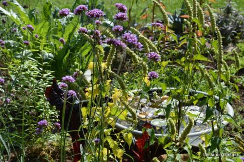 chez Dédé,papillons,Claudine Dordogne,champignons,toile d'araign 105.JPG