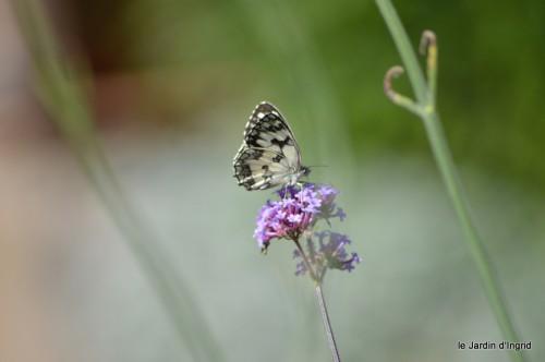 coeur des fleurs,papillons,libellules 175.JPG