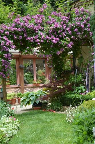 tour du jardin en juin 049.JPG