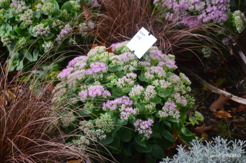 Neuvic,jardin,champignons canal 143.JPG