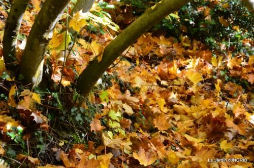 les arbres en automne,cabane 093.JPG