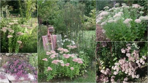 2012-09-14 jardin,Arya,voiture,kois,nicky1.jpg