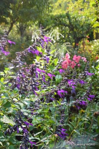 male ancienne,septembre jardin,couronne,bouquet 062.JPG