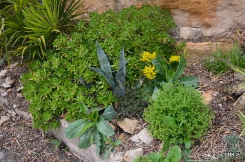 la Roque Gageac,Ines,jardin 028.JPG
