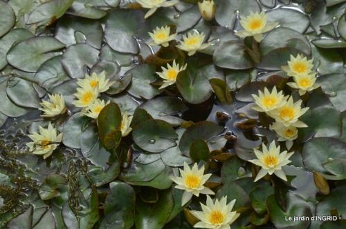 orage,puces,bouquet,Anniv.Ines,Brantome,Jardins d'eau 286.JPG