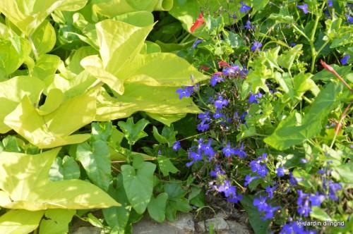 jardin,fruits,Caro,papillons,manthe religieuse,Lalinde 085.JPG