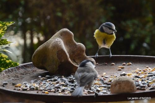 oiseaux,crocus,composition,le Sol 064.JPG
