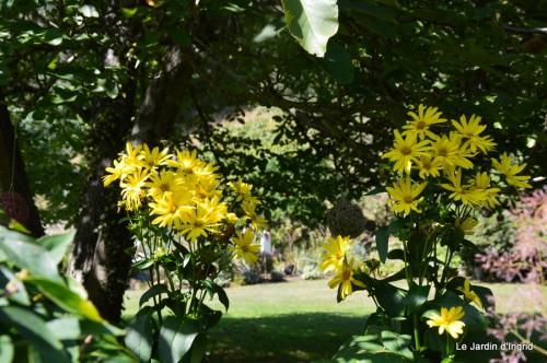 jardin,puces Lasmonzie,asters 128.JPG