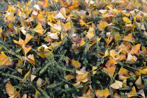canal,automne,tonte des feuilles 018.JPG