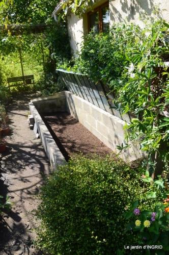 Tuillières,stenbergias,Jaune,jardin,chassis 234.JPG
