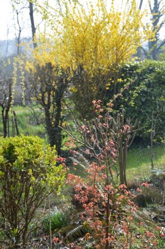 chevreuil,jardin,Paques avec les enfants 049.JPG
