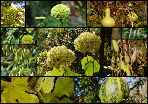 2015-09-06 dahlias,massifs refaits,Lalinde,jardin4.jpg