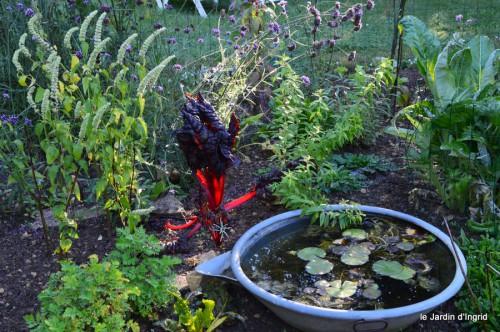 jardin,asters,fleurs blanches,chatte,rosiers roses 002.JPG