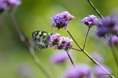 coeur des fleurs,papillons,libellules 166.JPG