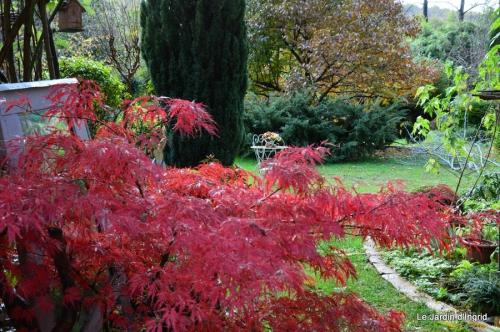 travaux,érable rouge,abeilles,Monpazier,jardin 113.JPG