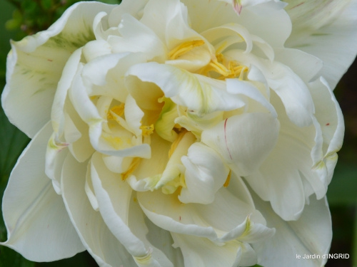 jardin printemps 009.JPG