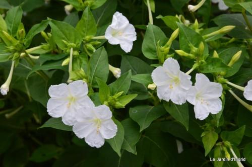 jardin,les filles,fleurs Peyrichou 002.JPG