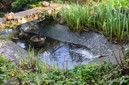 semis,bassin,tour du jardin 114.JPG