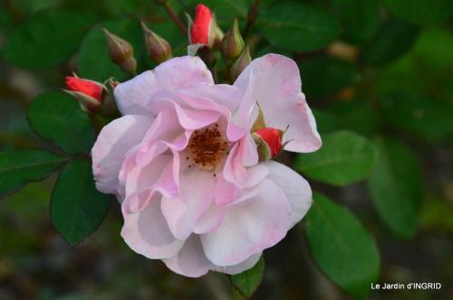 jardin Mme Perichou,grandes fleurs,bouquet,jardin 034.JPG