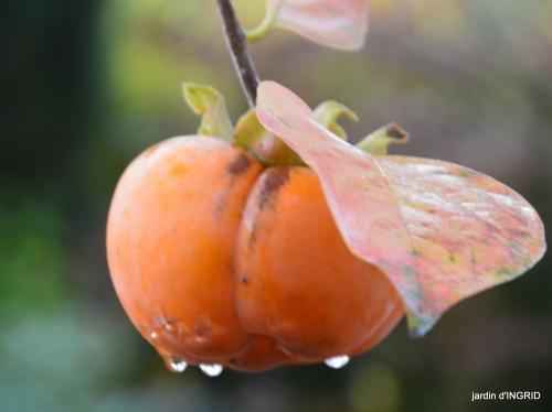 couleurs d'automne,bouquet,lune 076.JPG