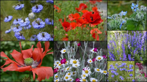 2013-06-23 jardin,potager,roses,sauges5.jpg